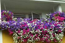 Soutěž o nejkrásnější květinovou výzdobu: 1. místo v absolutním pořadí: Svatava Soperová, Stupkova ul.