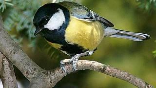 Dobré černé ptáky