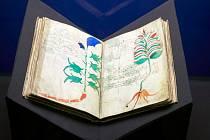 Voynichův rukopis ve Vlastivědném muzeu v Olomouci