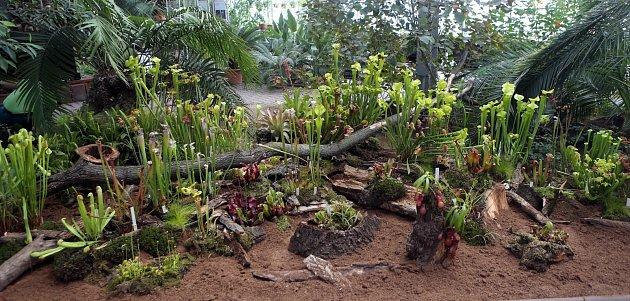 Výstava masožravých rostlin na Floře.