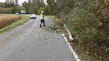 Hasiči likvidují větrem popadané stromy v Olomouckém kaji, 21. října 2021