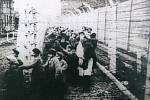 Snímek z doby, kdy do koncentračního tábora v polské Osvětimi dorazila ruská armáda.