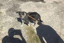 Zatoulaní psi v Olomouci