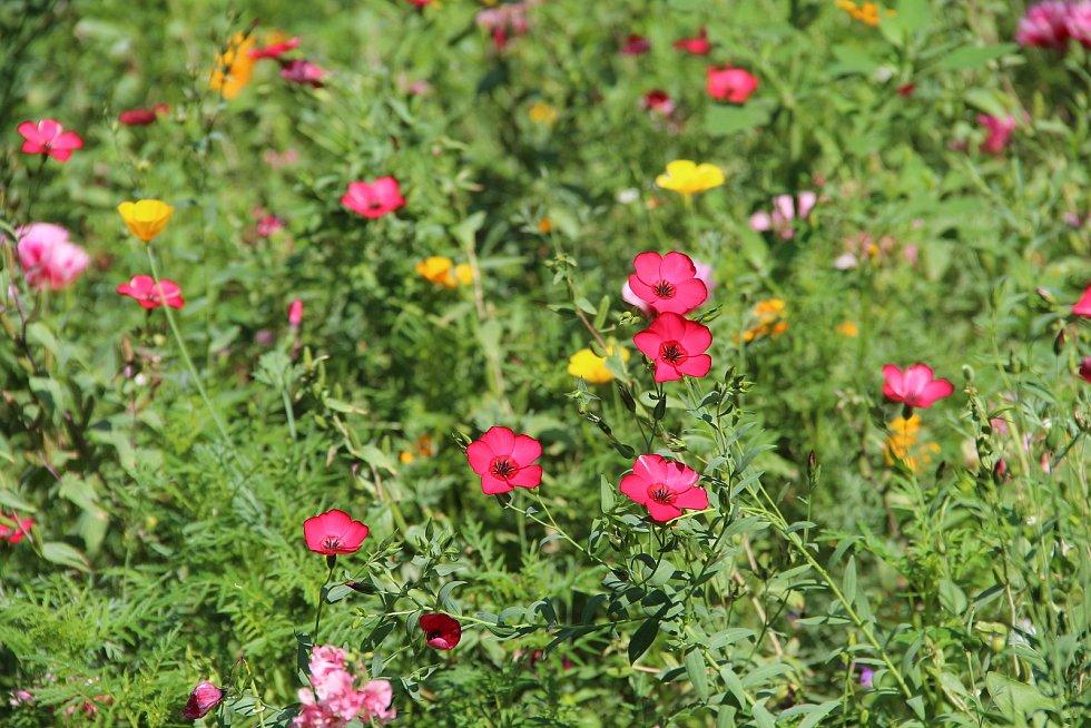 Květinové záhony v olomouckých parcích hýří barvami a lákají hmyz.