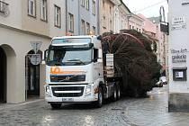 Kácení, převoz a stavění olomouckého vánočního stromu – 16. 11. 2014
