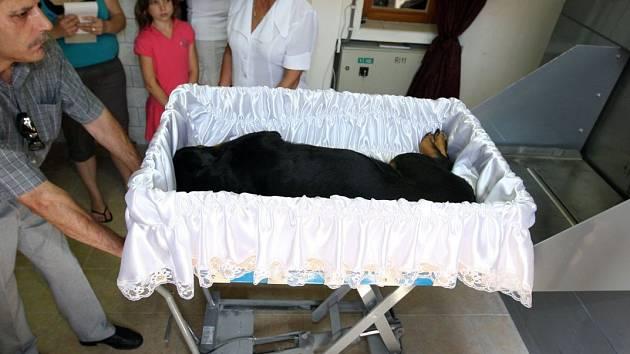 Zvířecí krematorium. Ilustrační foto