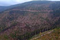 Následky větrné smršti v okolí Dolní Moravy pdo Králickým Sněžníkem. Říjen 2015