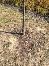 Hnutí spOLečně před pár dny instalovalo na stromy v centru města zavlažovací vaky. Město krok kritizuje, stromům to prý může uškodit.Foto: Deník/Ondřej Dluhí