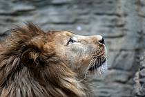 Uzavřená Zoo Olomouc