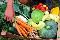 Zeleninová bedýnka. Ilustrační foto
