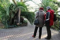 Prohlídka palmového skleníku na Výstavišti Flora Olomouc