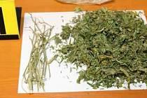 Zadržení drogového dealera v Olomouci - Policisté u muže našli 50 gramů sušiny s obsahem THC.