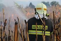 Rozsáhlý požár kukuřičného pole ve Lhotě Lhotě u Šternberka