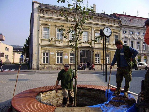 Strom v centru.