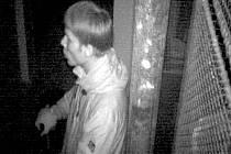 Zloděje, kteří vykradli sklepy v panelovém domě v Nedvědově ulici v Olomouci, zachytila kamera