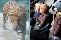 Letošní první teplý den v olomoucké zoo