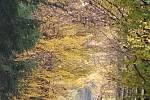 Doubravské lesy, mlha v poledne opadla