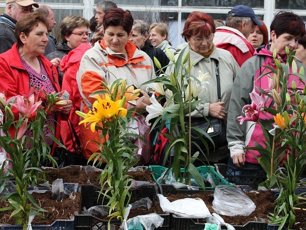 Jarní etapa Flory v Olomouci
