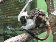 Olomoucká zoo