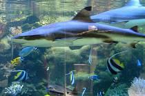 Žralok v olomoucké zoo