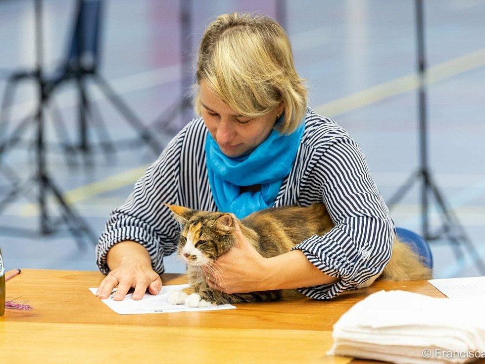 Chovatelka a posuzovatelka britských krátkosrstých koček Lucie Pánková na výstavě.