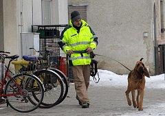 Kynolog se speciálně cvičeným psem pomáhá při pátrání po zmizelé Pavle Navrátilové