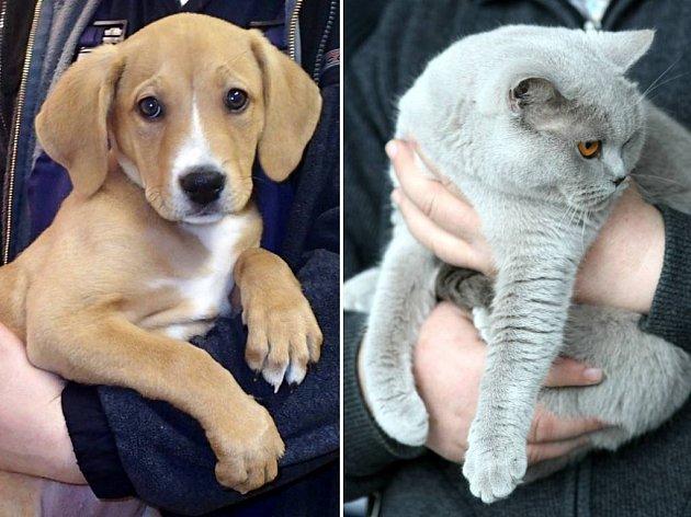 Máte raději kočky nebo psy? Ilustrační foto