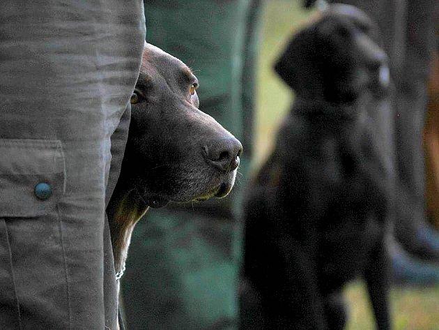 Mezinárodní soutěž loveckých psů u Lovecké chaty