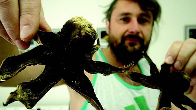 Mykolog Libor Tmej ukazuje jeden z exponátů, hvězdovku vlasohlavou.