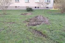 Některým obyvatelům Ústí nad Orlicí se nelíbí způsob výsadby zeleně.
