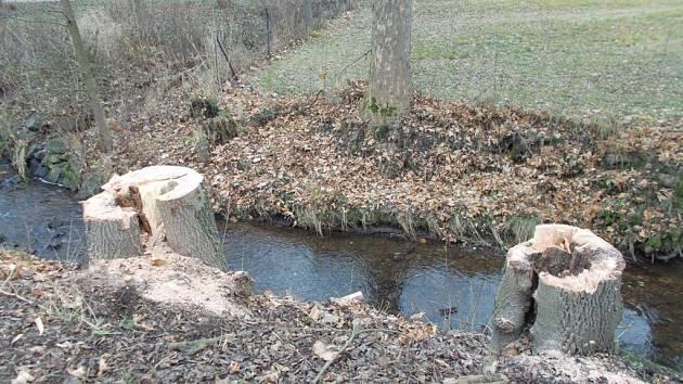 Stromy už byly nebezpečné, stát je nechal pokácet.