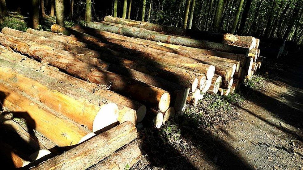 Kácení v městských lesích v Lanškrouně nesou někteří obyvatelé města nelibě. Foto: Facebook