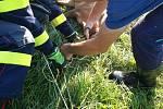 Na pomoc srnečkovi vyrazili hasiči z Chrudimi.