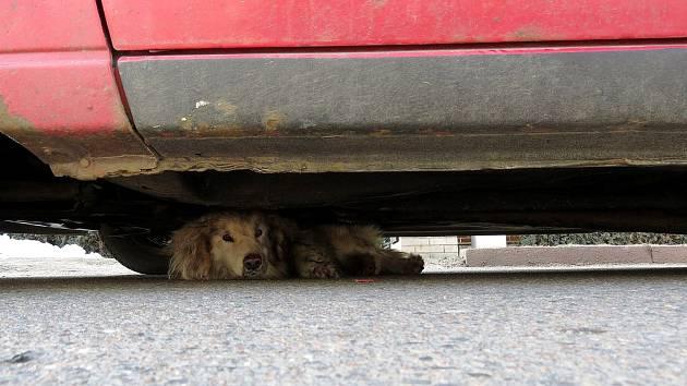 Pes vběhl pod auto, vyprostit ho museli hasiči.