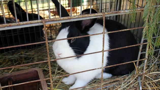 Ve Slatině vystavovali králíky, andulky i modely