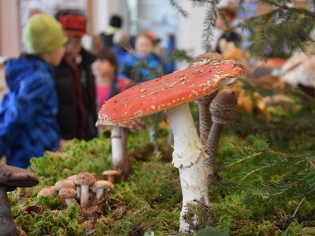 31. ročník výstavy hub na zámku v Chocni. Mykologům se podařilo dát dohromady 530 druhů hub - jedlých, nejedlých, jedovatých i vzácných.