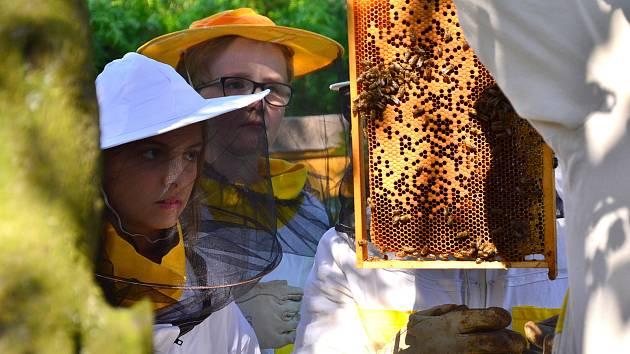 Za špatnou včelařskou sezonu může především změna klimatu. Zatímco vloni trápilo včelaře sucho, letos to bylo špatné jaro.