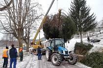Vánoční strom pro Letohrad pokáceli v Jankovicích pracovníci technických služeb.