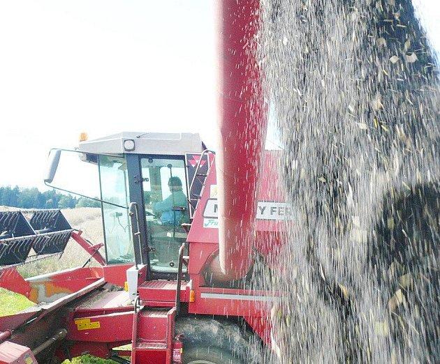 Nepřízeň počasí zatím komplikuje zemědělcům sklizeň.