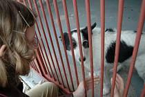 Útulek v Žamberku poskytuje azyl psům bez majitelů i dočasné ubytovaní v hotelu.