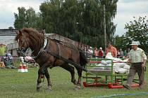 Soutěž pro chladnokrevné koně Chlaďas.