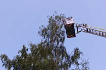 Papoušek Žako zásah hasičů pozoroval z patnáctimetrové nedaleké břízy.