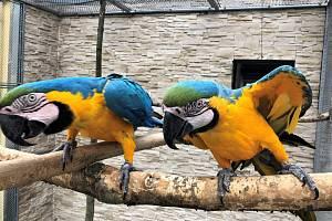 Letohrad: jak se žije zvířatům za covidu