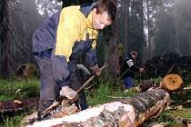 Pořádná dřina čekala na brigádníky při odstraňování následků větrné smršti Kyrill. V nejvzácnějších lokalitách Krkonoš byly kmeny zbaveny kůry a ponechány na místě. Odkornění předešlo rozmnožení kůrovce, který by jinak zničil les úplně.