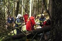 Na muže při těžbě dřeva spadl u Červené Vody strom.