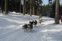 Závod psích spřežení ve sprintu o Pohár lady Bright Magadan.