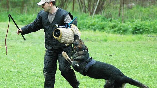 a95a7f5c6e3 Speciální policejní psi drogy hledají