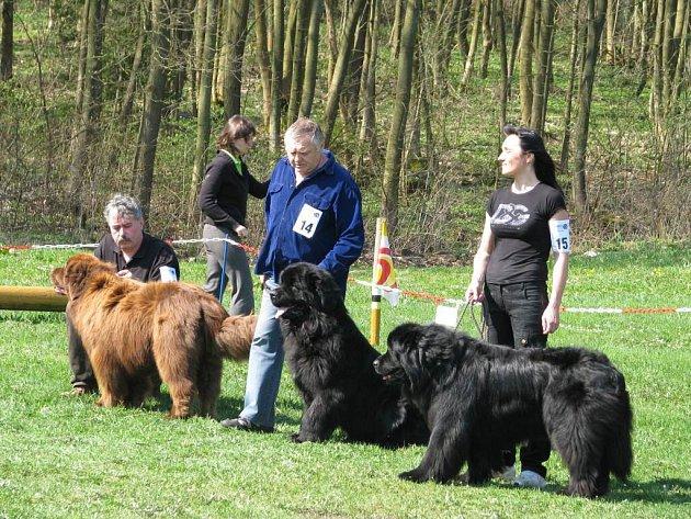 Celostátní Velikonoční výstava novofundlandských psů se konala v rekreačním areálu lanškrounské Obory.