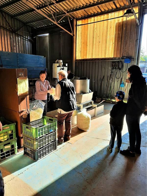 V Bučině na Vysokomýtsku znovu začíná prodej krouhaného zelí.