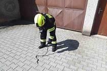 Užovku hasiči odlovili a vypustili do přírody.